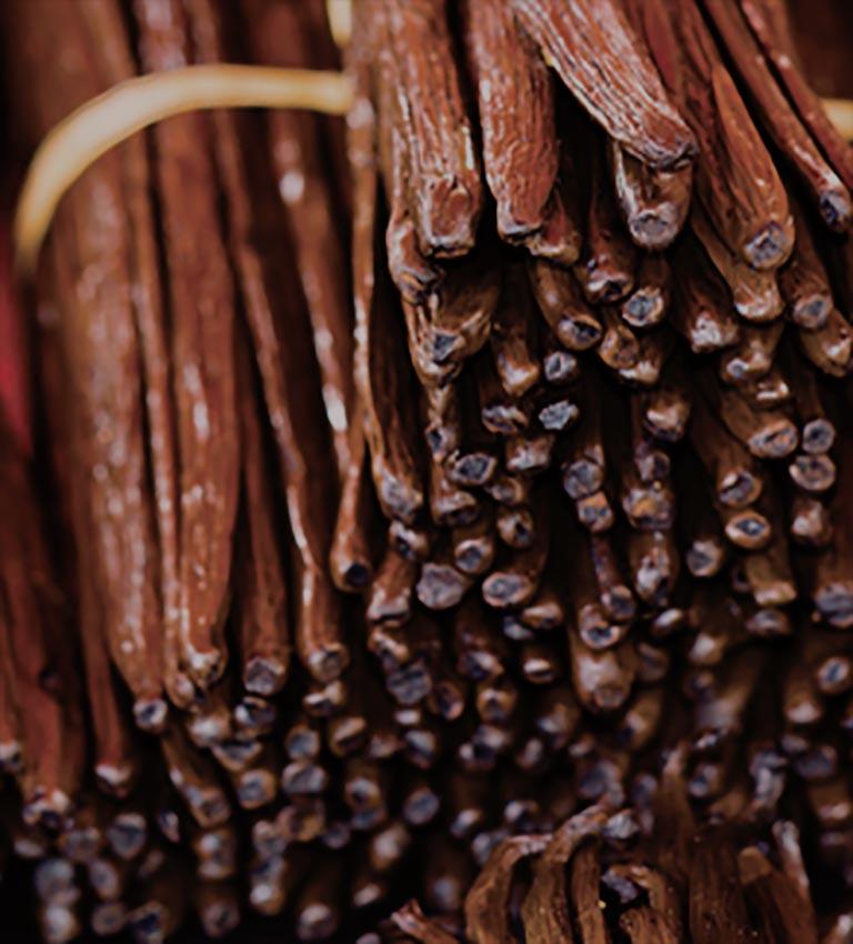Variété : Vanilla Planifolia